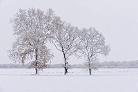Winter landscape, Niedersachsen, Germany / Winterlandschaft, Niedersachsen, Deutschland