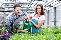 Germany, Bavaria, Munich, Mature man and woman watering rocket plant in greenhouse