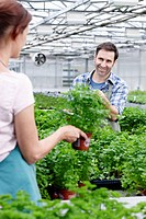 Germany, Bavaria, Munich, Mature man and woman in greenhouse between parsley plants (thumbnail)