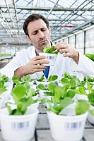Germany, Bavaria, Munich, Scientist in greenhouse examining corn salad plants (thumbnail)