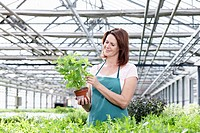 Germany, Bavaria, Munich, Mature woman in greenhouse with basil plants (thumbnail)