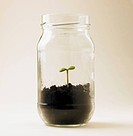 Single seedling in glass jar, studio shot