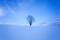 Snowy field.