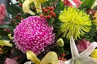 Flowers. Taiwan
