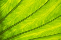 Close_up of surface of a green leaf