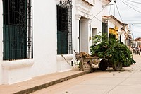 Santa Cruz de Mompox, Mompos, Bolivar, Colombia