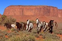Mustang, Equus caballus, Monument Valley, Utah, USA, Northamerica, group