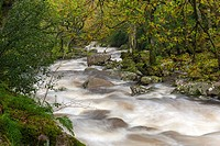 Rocky River Plym flowing through Dewerstone Wood near Shaugh Prior in Dartmoor National Park, Devon, England, UK, Europe