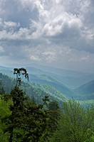 Spring near Newfound Gap, Great Smoky Mtns Nat. Park