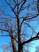 Winter Tree Against Sky