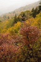 Autumn, Blue Ridge Parkway, Western NC