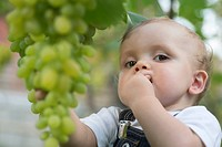 Baby tasting grapes