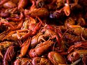 pile of lobster.
