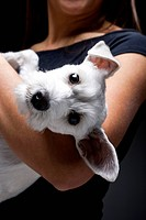 Woman with white dog on shoulder
