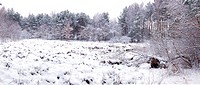 Panorama of winters