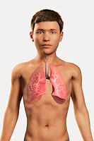 Digital illustration of a pre_adolescent male child with the respiratory system visible within the chest.