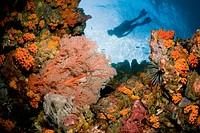 Underwater View of Snorkeler Exploring a Reef