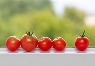 Row of tomatoes on window sill