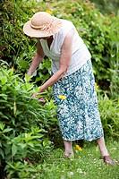 Senior at gardening