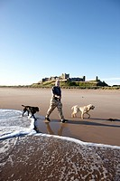 Francis Watson_Armstrong with two dogs on the beach in front of Bamburgh Castle, Bamburgh, Northumberland, England, Great Britain, Europe