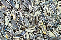 Sunflower Seeds Close_up