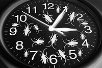 Toy Cockroaches on Clock