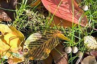 Autumn leaves on grass with small mushrooms