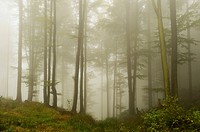 Foggy morning in the Bavarian Forest