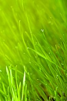 green spring grass background