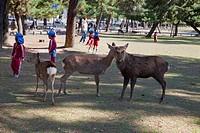 Deers in Nara Park, Nara, Japan