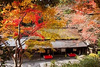 Autumn colours, Hirano_ya, Toriimoto, Sagano, Kyoto, Japan
