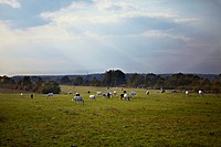 Meadow, horses, grazing, Croatia,