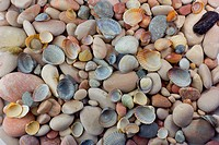 Sea pebbles and shells background