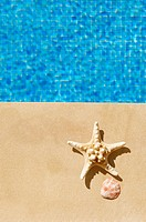 Starfish and scallop beside a swimming pool