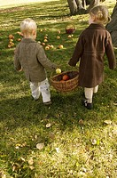 Children carrying a basket of apples