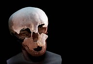 Neanderthal child´s skull. Cast of a skull of a Neanderthal Homo neanderthalensis child based on the Devil´s Tower Gibraltar 2 fossil. Neanderthals in...