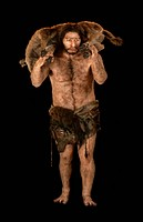 Neanderthal model. Reconstruction of a Neanderthal Homo neanderthalensis based on the La Chapelle_aux_Saints fossils. Neanderthals inhabited Europe an...