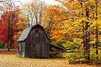 A small farm barn with fall foliage color in the forest near Paulding, Michigan, USA