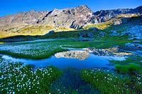 Laghetti Laiozz, Switzerland, Europe, canton, Ticino, Val del Coro, marsh scenery, scenery, cotton grass, blossom, cotton grass,