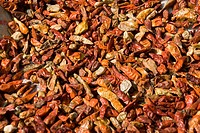 Red Chillies spices being dried in sun , Konkan , Sindhudurg district , Maharashtra , India , Asia