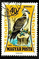 Osprey, Pandion Haliaetus, Águila Pescadora, Animal Stamps