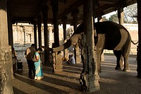 Elephant blessing people at Thiruvannamalai temple , Tamil Nadu , India