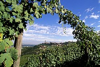 village and vineyards of Barbaresco, province of Cuneo, Piedmont region, Italy, Europe