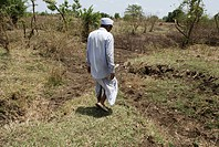 Farmer working on agricultural land ; Marathwada ; Maharashtra ; India