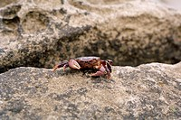Crab on a boulder