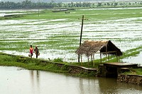 Backwater scene at Melpadom in Mannarsala during a monsoon day , Kerala , India