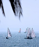 Best Leisure Activity _ Sailing Race On The Ocean