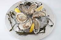 Plate of Oysters and Lemons