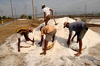 Workers at salt heap in saltpan in Bombay Mumbai, Maharashtra, India