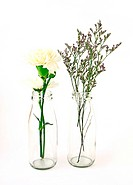 flowers in a bottle on white background